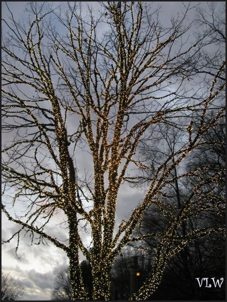 BG Tree with Lights
