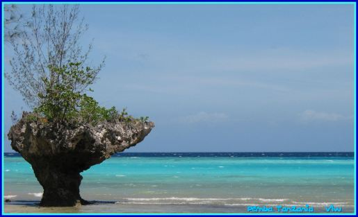 Pemba beach with tree