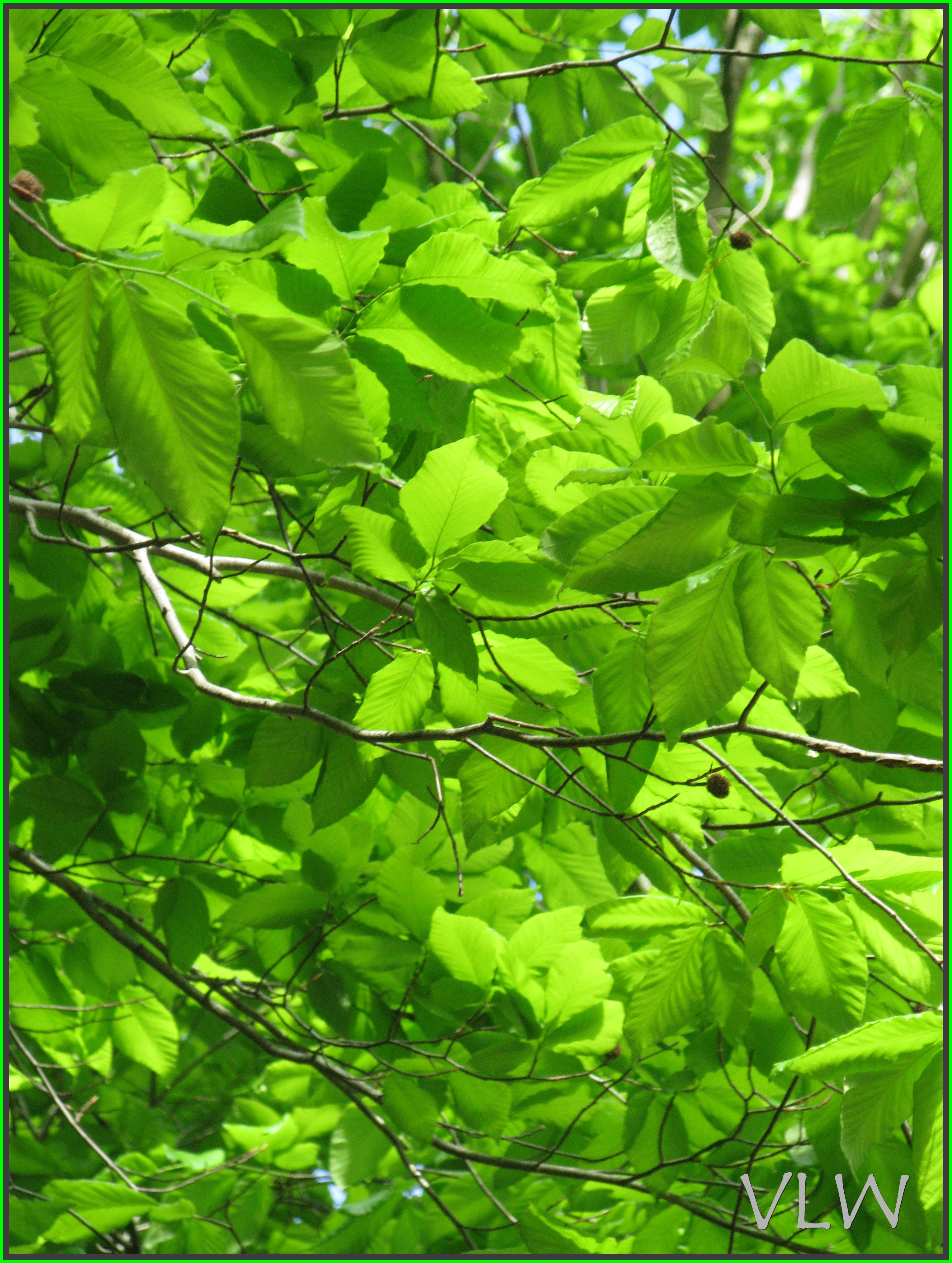 Displaying 18> Images For - Going Green Tree...