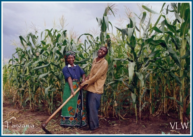 Tanzania Happily Hoeing in the Maize (2)