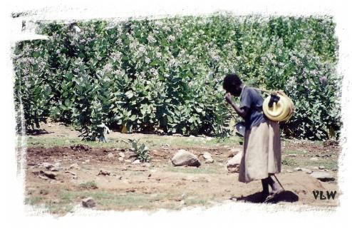 Water Kenya