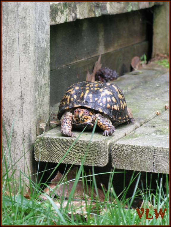 TURTLE on step