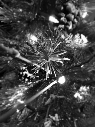 tree light star