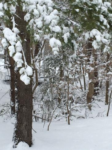 02 26 snowy tree