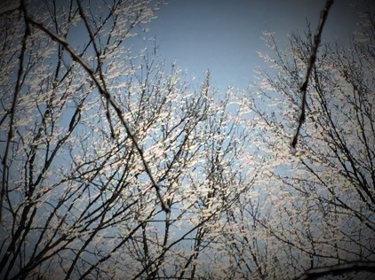 icy trees (2)