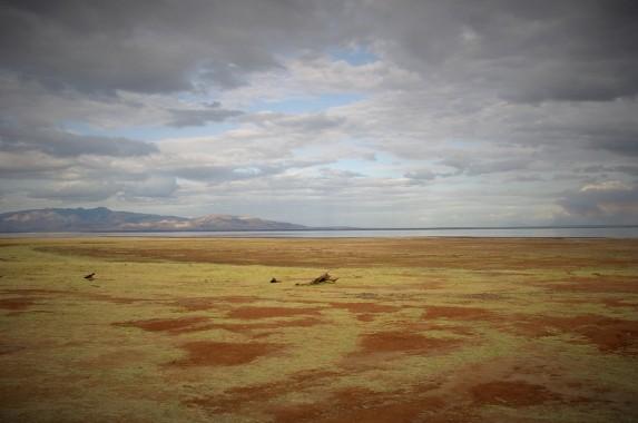 safari (130)