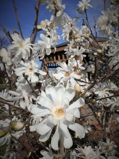 Memorial park pagoda flowers