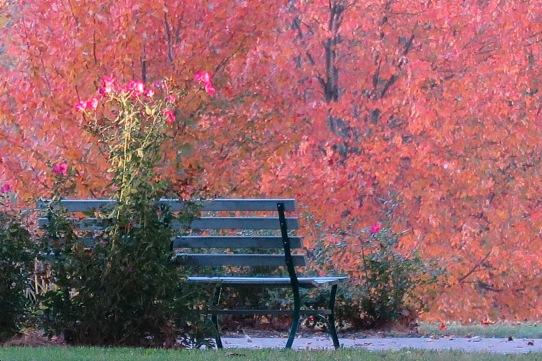 JC labyrinth bench fall trees