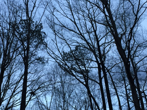 Stormy trees